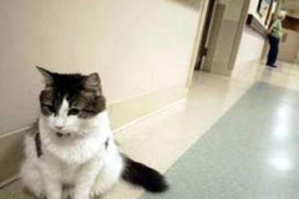 """ჰოლივუდში იღებენ ფილმს """"სიკვდილის მაუწყებელ"""" კატაზე"""