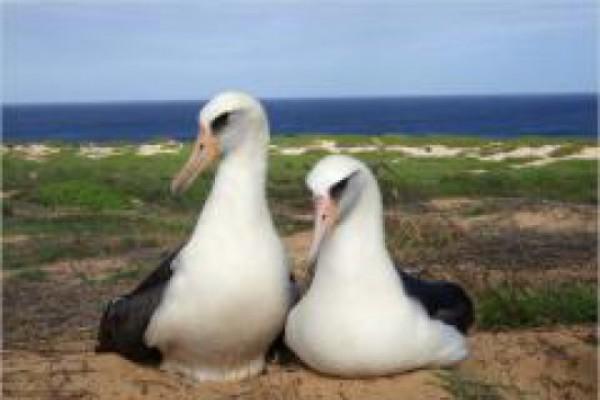 ფრინველებზე დაწერილ წიგნში 7 მილიონ 300 ათასი სტერლინგი გადაიხადეს