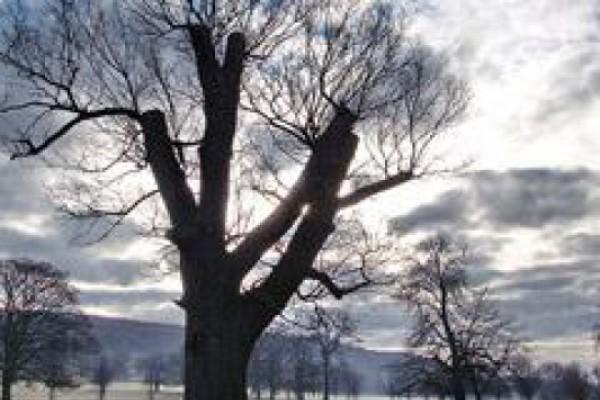 კორტებზე ხეები გაჩეხეს და ახლა დედაენის ბაღს მისდგნენ