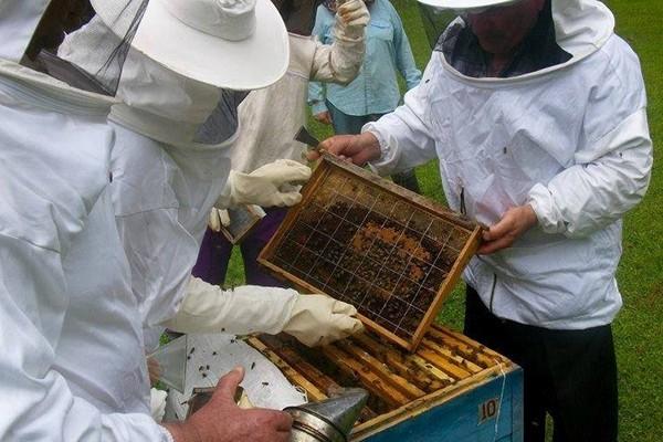 ქართულმა თაფლმა ევროპაში ვერაფრით შეაღწია