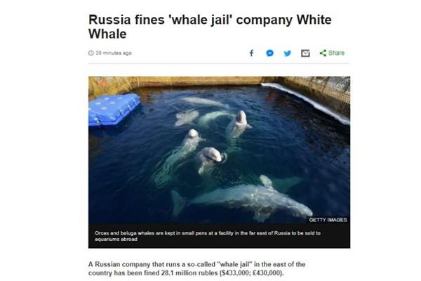 სასამართლომ დააჯარიმა კომპანია რომელმაც რუსეთში ვეშაპები დაატყვევა