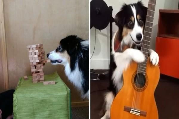 გაიცანით ძაღლი, რომელსაც თქვენზე მეტი რამის გაკეთება შეუძლია