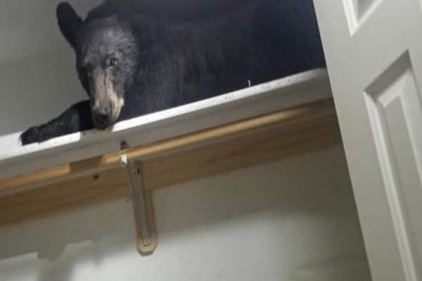 სახლში შეპარულ დათვს გარდერობში ჩაეძინა