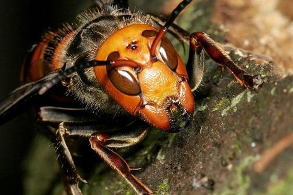 """""""აქამდე ფუტკარს ფაროსანას წინააღმდეგ შეწამვლამ მიაყენა დიდი ზიანი, ახლა კი კრაზანისგან გვიწევს მათი დაცვა"""""""