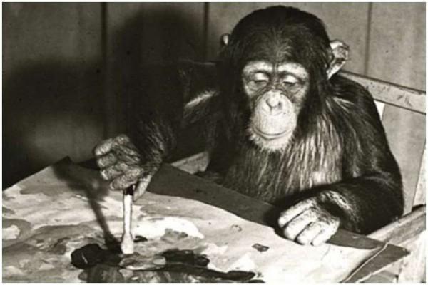 შიმპანზეს მიერ დახატული ნახატები აუქციონზე $250 ათასი დოლარად იყიდება