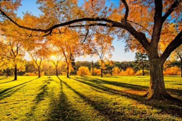 მთელი ნოემბერი თბილი იქნება - ამინდის გრძელვადიანი პროგნოზი
