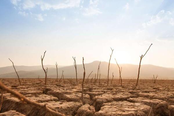 კლიმატური კატასტროფისგან დედამიწის გადარჩენის ფასი დასახელდა