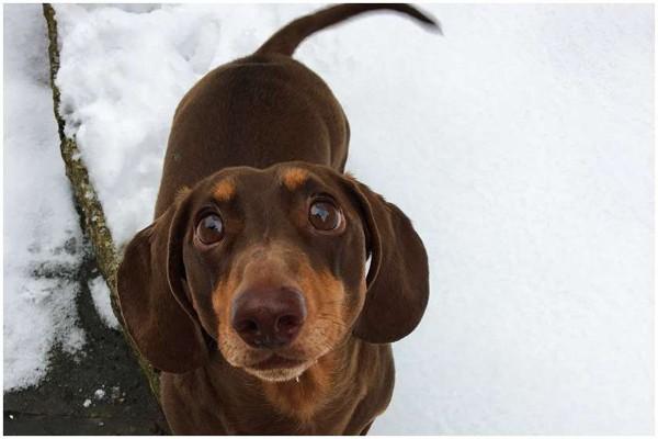 კარანტინისას პატრონის მუდმივად სახლში ყოფნით ბედნიერმა ძაღლმა ქიცინისგან კუდი იღრძო