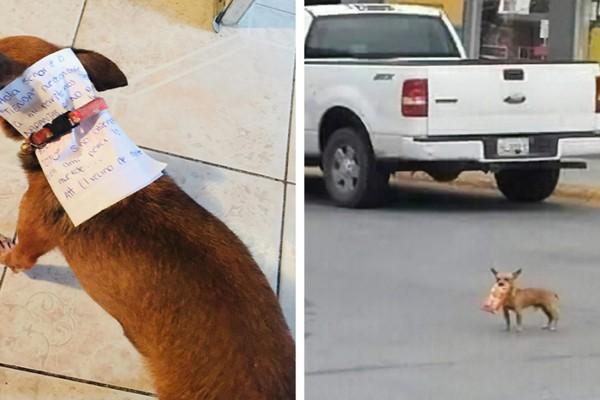 მამაკაცმა კარანტინიდან ორცხობილის საყიდლად ძაღლი გააგზავნა