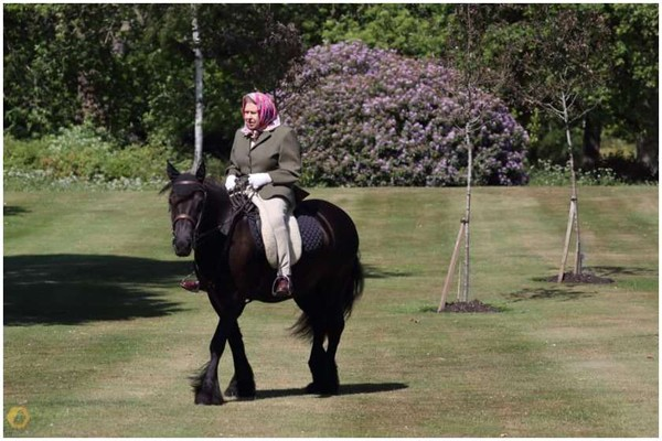 სამეფო ოჯახმა პონით მოსეირნე ელისაბედ II-ის ფოტო გამოაქვეყნა