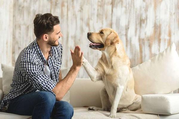 მეცნიერებმა ძაღლის და ადამიანის ასაკის შედარების ახალი ფორმულა დაადგინეს