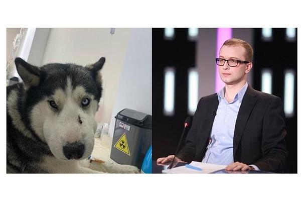 ოთხფეხა გმირი: ძაღლმა ტაბახმელაში 5 წლის ბავშვი გიურზასგან გადაარჩინა