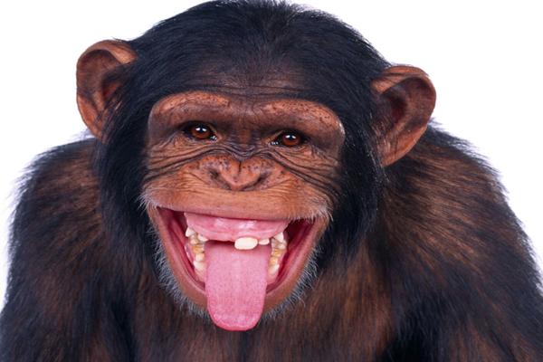 თბილისის ზოოპარკიდან მაიმუნები გაიქცნენ
