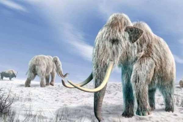 ამერიკელი მეცნიერები ათასობით წლის წინ გადაშენებული მამონტების გაცოცხლებას აპირებენ
