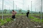 sarTiWalaSi-Tibisis-mxardaWeriT-samacivre-meurneoba---agrokompleqsi-iwyebs-funqcionirebas