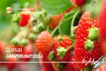 saqarTvelos-banki-bizness-agromeurneobis-dazRvevas-sTavazobs