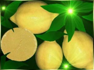 citrusi-ganaxevrdeba-da-gaZvirdeba