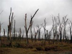 cxinvalis-regions-uwylobis-gamo-gaudabureba-emuqreba