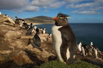 Brexit-i-SesaZloa-pingvinebsac-Seexos