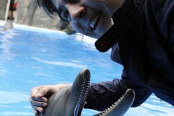 miSa-da-delfini