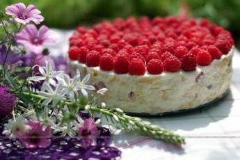marwyvisa-da-Jolos-torti