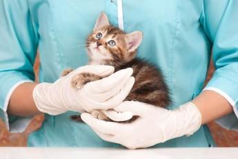 ukrainaSi-veterinarulma-klinikam-katebis-Camxutebelis-vakansia-gamoacxada
