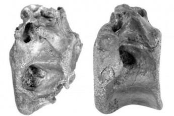 ingliselma-mecnierebma-dinozavris-aqamde-ucnobi-saxeoba-aRmoaCines