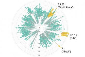 koronavirusis-ew-samxreT-afrikuli-Stami-da-axali-safrTxe-qveynisTvis---ra-maxasiaTeblebi-aqvs-B-1-351-s