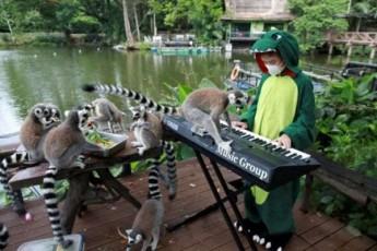tailandSi-11-wlis-gogo-zooparkis-binadrebisTvis-koncertebs-marTavs